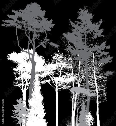 Image of Nature. Tree Silhouette. Eco banner. Vector Illustratio - 101320018