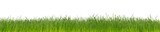 green natural grass isolated on white background