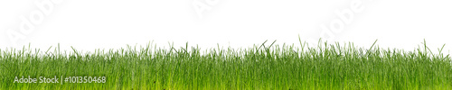 green natural grass  isolated on white background - 101350468