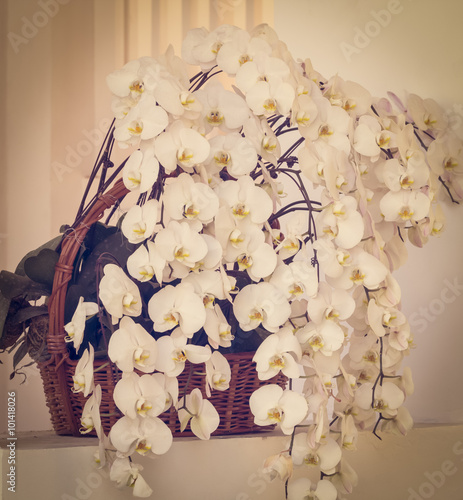 orchid flower background,vintage toning,selective focus © Phongphan Supphakank