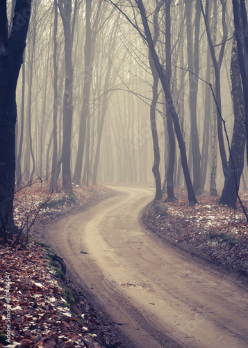 Fototapeta Forest road with dark trees on foggy late autumn day