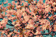 Obrazy na płótnie, fototapety, zdjęcia, fotoobrazy drukowane : Vintage blossoming apple tree