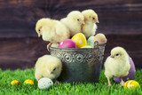 Fototapety Bucket full of easter eggs and chicken