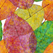 Seamless pattern with colored autumn leaves. Vector, EPS 10.