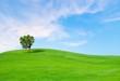 Obrazy na płótnie, fototapety, zdjęcia, fotoobrazy drukowane : Tree.