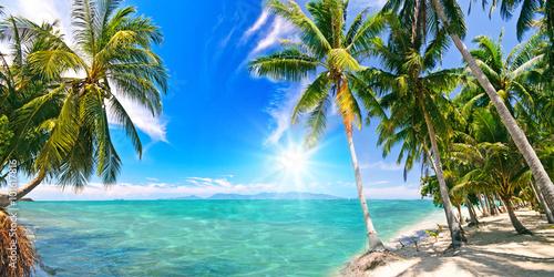 Poster Karibischer Traumstrand mit Palmen :)