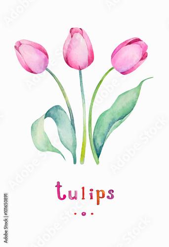 Vector Watercolor Spring Tulips