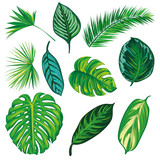 Tropical Leaves Collection on isolate vector. Beautiful Set. Vector illustration. Eps 10. - 101665426