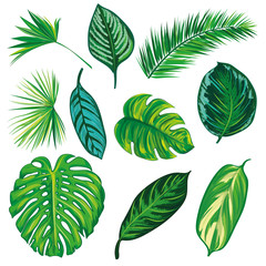 Tropical Leaves Collection on isolate vector. Beautiful Set. Vector illustration. Eps 10.