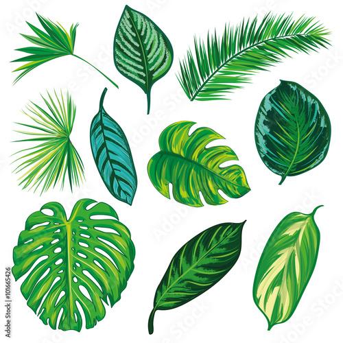 Tropikalna liść kolekcja na odizolowywa wektor. Piękny zestaw. Ilustracji wektorowych. EPS 10.