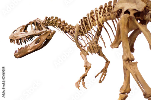 Billede Dinosaur skeleton over white isolated background