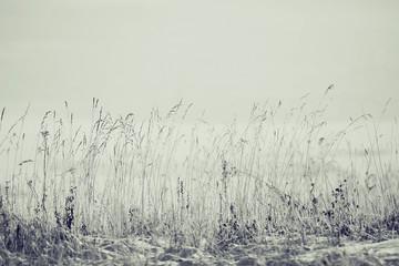 monochromatyczne krajobraz zimowy mróz trawy
