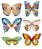 Watercolor vector butterflies - 101713641