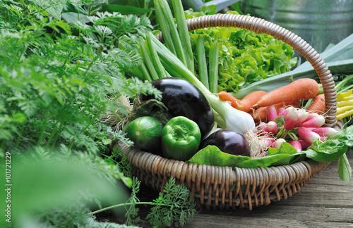 panier de légumes dans potager