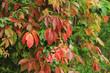 color autumn plant