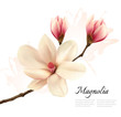 Beautiful magnolia flower background. Vector.