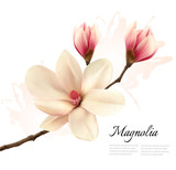Fototapety Beautiful magnolia flower background. Vector.