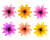 Fototapety Realistic 3D Set of Colorful Daisy Flowers for Spring Season Isolated in White Background. Vector Illustration