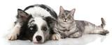 Hund und Katze - 101845837