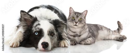 Fototapeta Hund und Katze