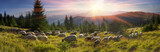 Fototapety Shepherds and sheep Carpathians