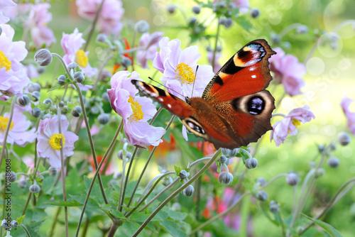 Poster Schmetterling 201