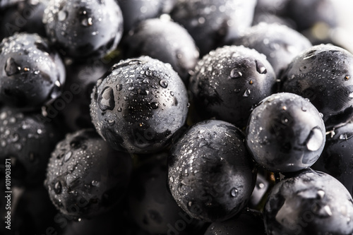 Ripe bunch of  blue grapes closeup with shining water drops © zozzzzo