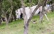 Obrazy na płótnie, fototapety, zdjęcia, fotoobrazy drukowane : Horse head closeup. Portrait of a horse by a tree in nature.