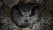 The evil eyes blinking. Eagle Owl (Bubo bubo) watching from a hollow tree. Forest in the night.
