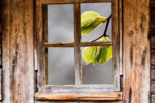 Zdjęcia na płótnie, fototapety, obrazy : Old wooden window frame, spring, flowering trees.