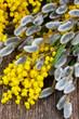 Obrazy na płótnie, fototapety, zdjęcia, fotoobrazy drukowane : French mimosa with catkins