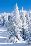 Vibrant winter vacation background with pine trees covered by heavy snow against blue sky  - 102011839