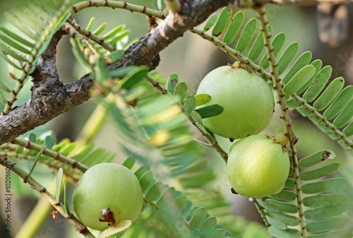tree i hindi