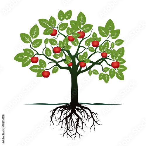 Young Tree with Green Leafs, Roots and Red Apples. Vector Illustration - 102016818