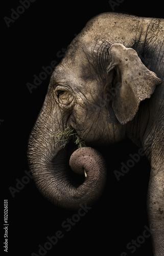 Poster, Tablou elephant