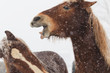 Obrazy na płótnie, fototapety, zdjęcia, fotoobrazy drukowane : 冬の牧場