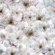 Spring flowers seamless pattern. Vector, EPS10