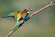 Obrazy na płótnie, fototapety, zdjęcia, fotoobrazy drukowane : Angry Bee-eater