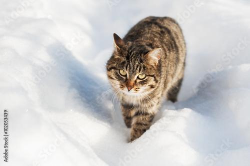 Tuinposter Eekhoorn Brown cat walking in the snow