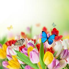 Beautiful tulips bouquet with butterflies