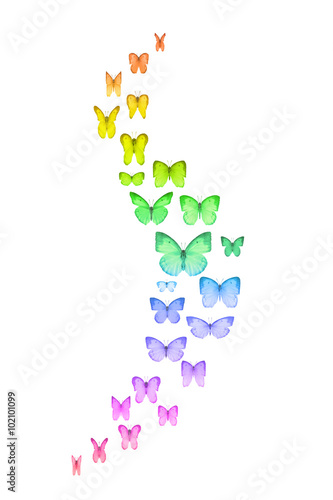 Poster Curved group of studio photographed rainbow colored butterflies with an emphasis