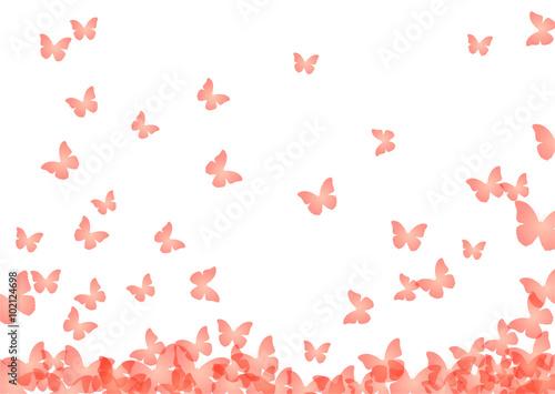 Zdjęcia na płótnie, fototapety, obrazy : Schmetterlinge