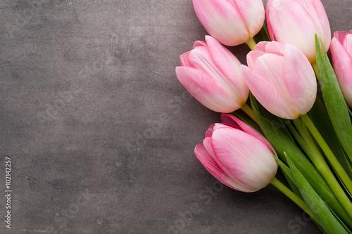 Zdjęcia na płótnie, fototapety na wymiar, obrazy na ścianę : Tulip on the grey  background.