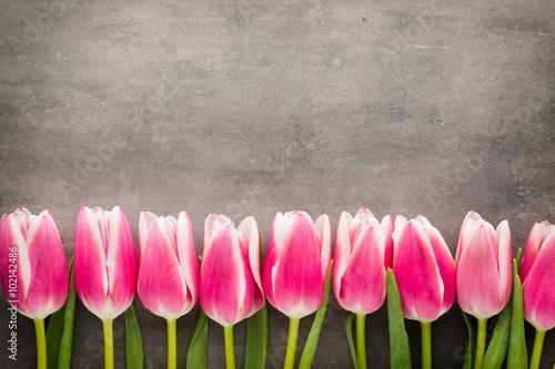 Zdjęcia na płótnie, fototapety na wymiar, obrazy na ścianę : Tulips on the grey  background.