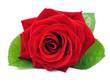Obrazy na płótnie, fototapety, zdjęcia, fotoobrazy drukowane : Single red rose
