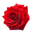 Obrazy na płótnie, fototapety, zdjęcia, fotoobrazy drukowane : Red rose isolated