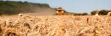 Récolte du blé , moissonneuse jaune - 102176285