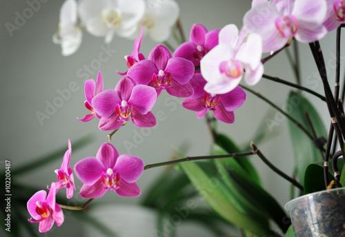 beautiful orchids - 102200487