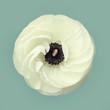 Top view of elegant white flower