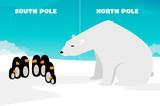 Polar bear vs Penguins